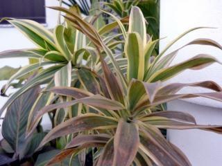 grüne Blätter mit gelben Umrisse, Linien, Blätter Kostenlose Fotos