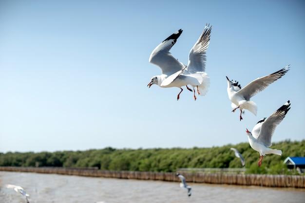 Gruppe der seemöwenvogelfliege nahe dem meer Premium Fotos