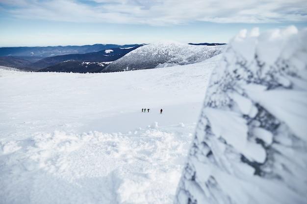 Gruppe von bergsteigern, die auf dem mit frischem schnee bedeckten hügel gehen. karpaten Premium Fotos