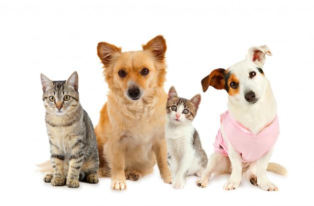 Gruppe von katzen und hunden Premium Fotos