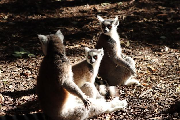 Gruppe von lemuren, die auf dem schlammigen boden mitten in einem wald sitzen Kostenlose Fotos