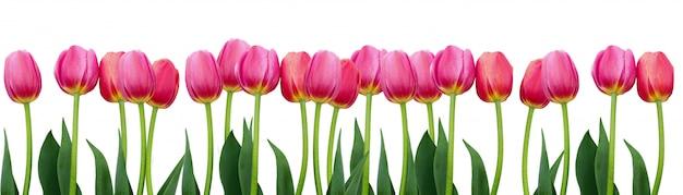 Gruppe von rosa tulpen mit blättern Premium Fotos