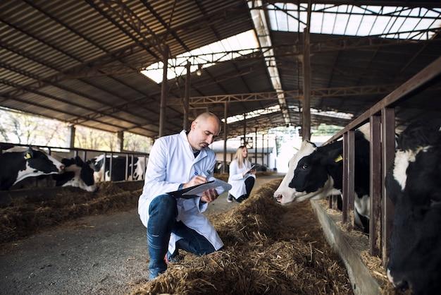 Gruppe von tierärzten, die den gesundheitszustand von rindern auf der kuhfarm überprüfen Kostenlose Fotos