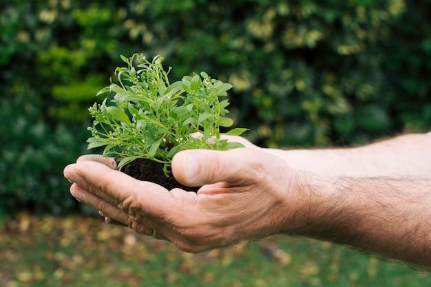 Hände des mannes mit kleinem schössling Kostenlose Fotos