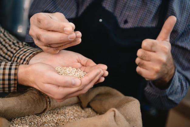 Hände von den brauern, die gerstenkörner im sack überprüfen. Premium Fotos