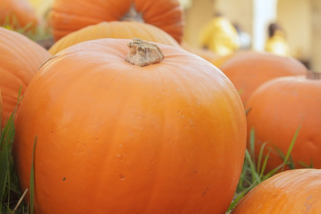 Halloween kürbis jack-o-laterne Premium Fotos