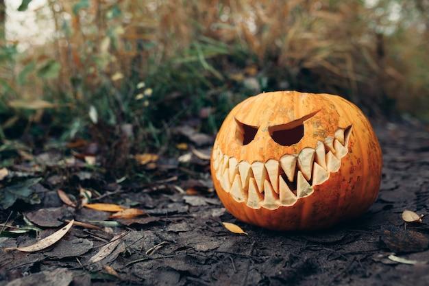 Halloween kürbisse Premium Fotos