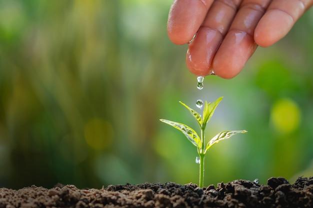 Hand des landwirts wässernd zur kleinen anlage im gartenhintergrund Premium Fotos