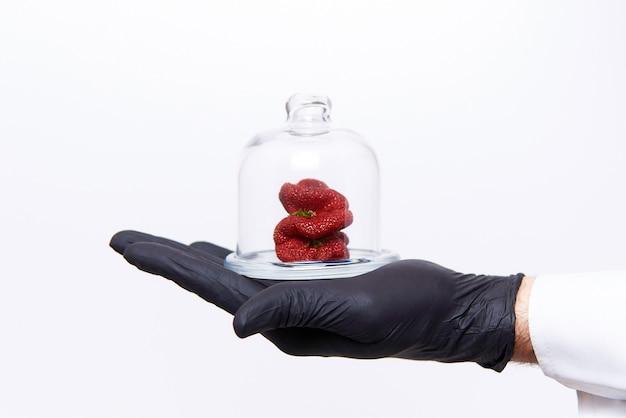 Hand des wissenschaftlers mit erdbeeren der merkwürdigen ungewöhnlichen form unter glaskappe Premium Fotos