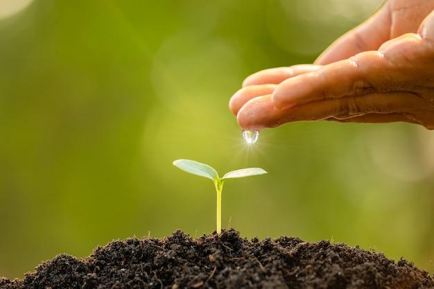 Hand, die dem jungen grünen spross, der im boden auf grüner naturunschärfe wächst, wasser gibt Premium Fotos
