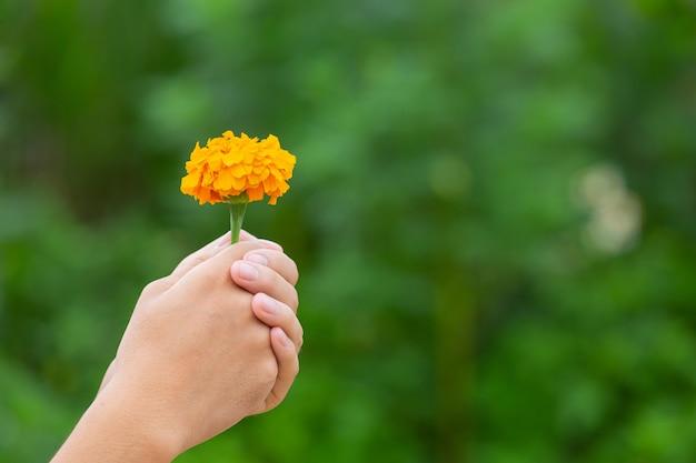 Hand, die gelbe schöne blühende blumen unter natur hält Kostenlose Fotos