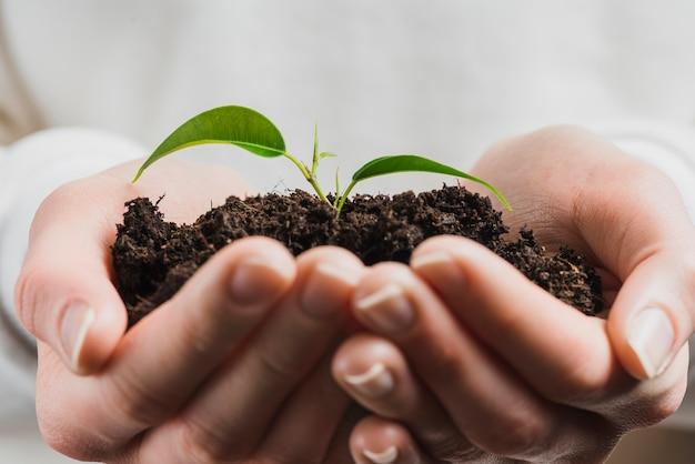 Hand, die grünen sprössling mit boden hält Kostenlose Fotos