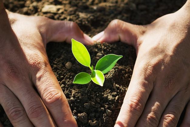 Hand, die jungen baum für das pflanzen hält. Premium Fotos