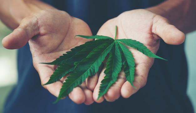 Hand, die marihuanablatt hält Premium Fotos