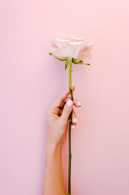 Hand, die schöne rosafarbene atelieraufnahme hält Kostenlose Fotos