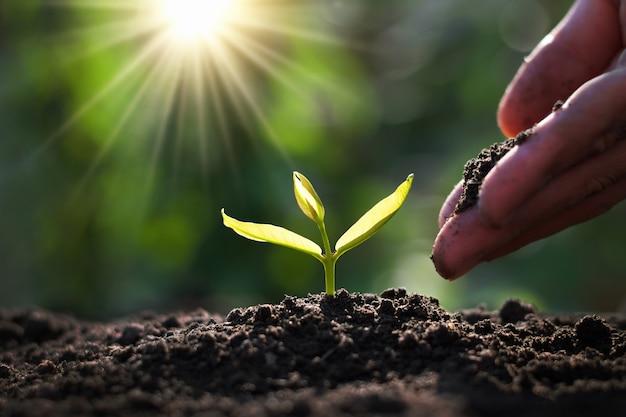 Hand, die sprössling im garten mit sonnenschein pflanzt Premium Fotos