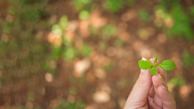 Hand hält eine junge pflanze Kostenlose Fotos