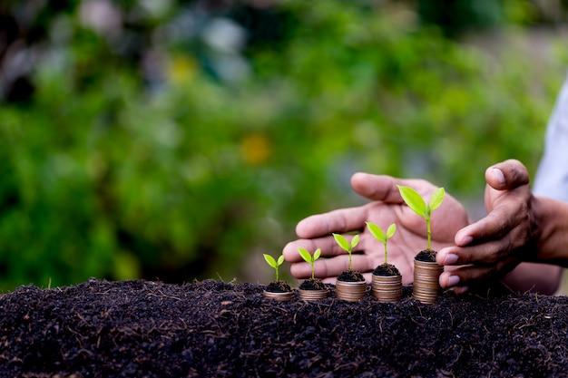 Handschutzgeldmünzen mögen wachsendes diagramm, die anlage, die vom boden mit grünem hintergrund keimt. Premium Fotos