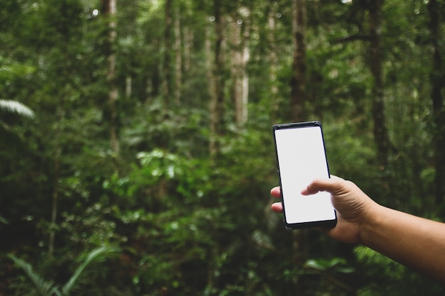 Handy im wald gibt es keinen kontakt. Premium Fotos