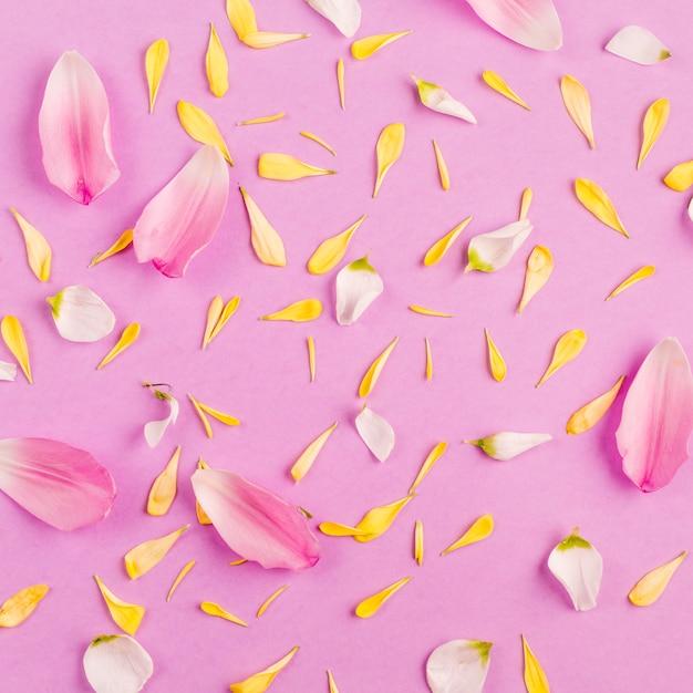Haufen von verschiedenen zerstreuten blumenblumenblättern Kostenlose Fotos