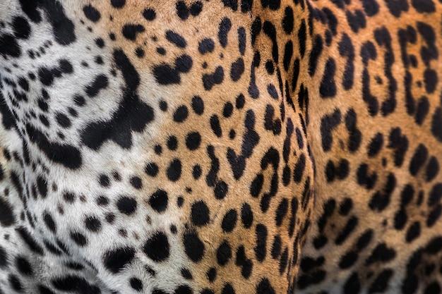 Haut- und leopardenmuster Premium Fotos