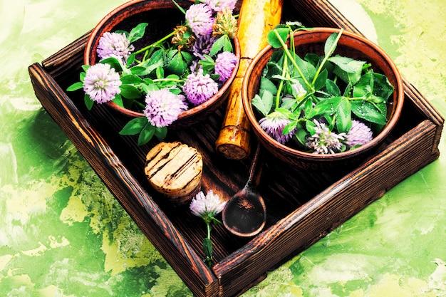 Heilpflanzenklee Premium Fotos
