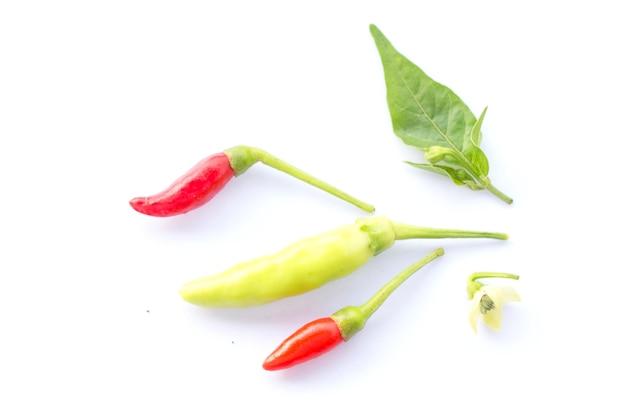 Heiße rote chili oder chili Premium Fotos