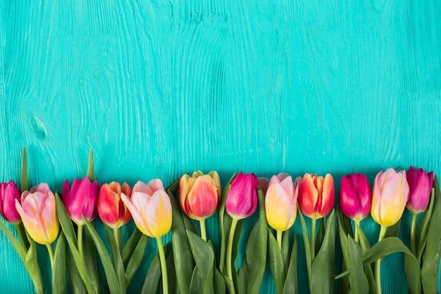 Helle bunte tulpen in reihe Kostenlose Fotos