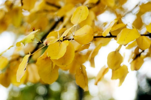 Heller gelber herbstlaub unter sonnenlicht. herbst saisonale hintergrund Premium Fotos
