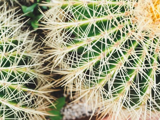 Heller stacheliger kaktus. draufsicht tropischer hintergrund Premium Fotos