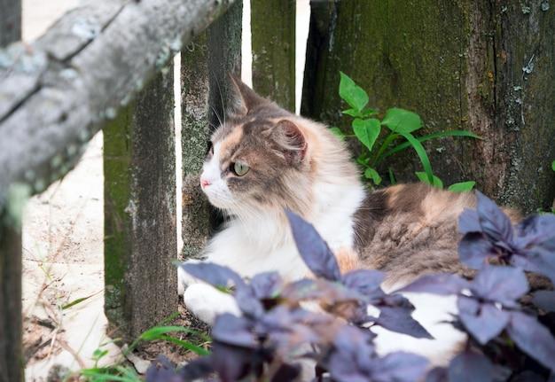 Hellrote katze liegt auf dem gras im dorf. Premium Fotos