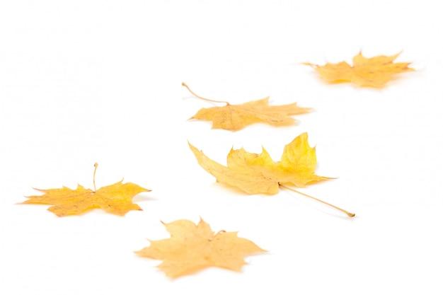 Herbst ahornblätter Premium Fotos