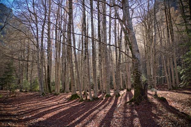 Herbst bäume im ordesa nationalpark, pyrenäen, huesca, aragonien, spanien Kostenlose Fotos