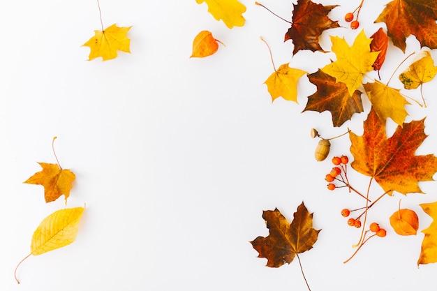 Herbst flach legen hintergrund auf weiß Kostenlose Fotos