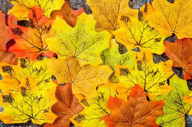 Herbst mit farbigen hellen blättern Premium Fotos