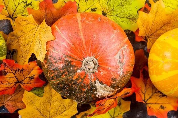 Herbst mit kürbissen und blättern Premium Fotos