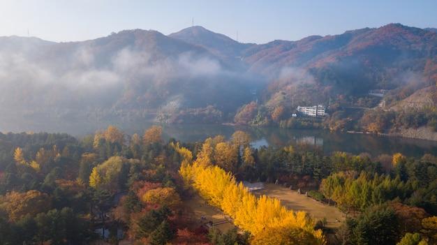 Herbst von nami island, seoul korea Premium Fotos