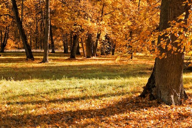 Herbstbäume im freien im wald. natur. Premium Fotos