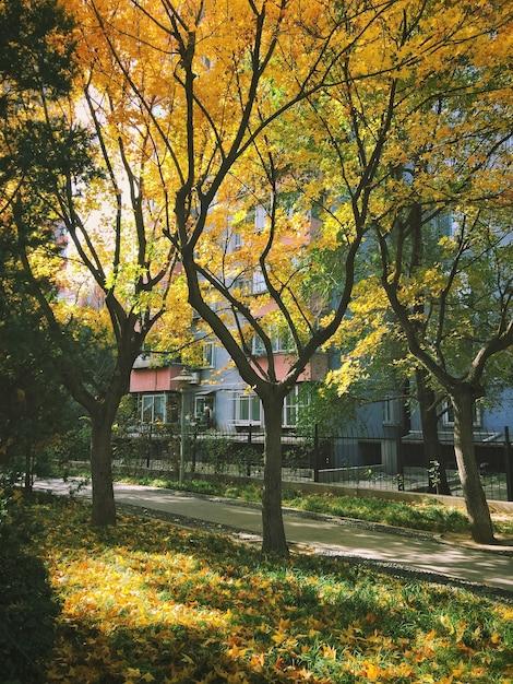 Herbstbäume mit buntem laub in einem park Kostenlose Fotos