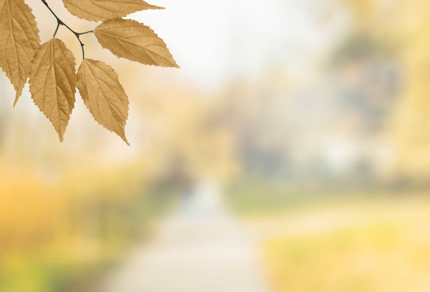 Herbstbaumast, der in der ecke hängt Kostenlose Fotos