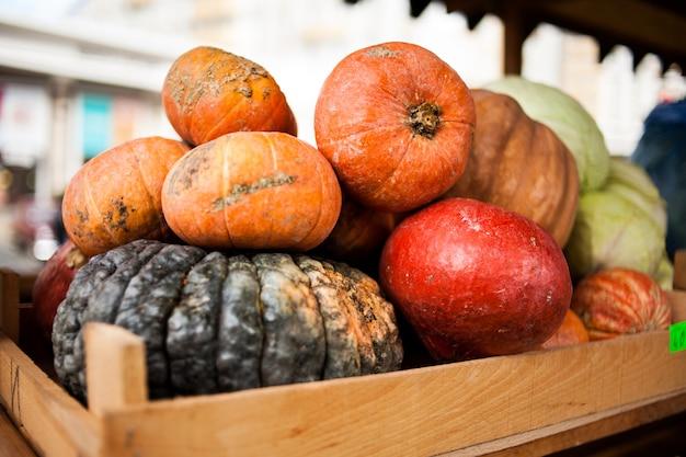 Herbsternte bunte kürbisse und kürbisse in verschiedenen sorten. Premium Fotos