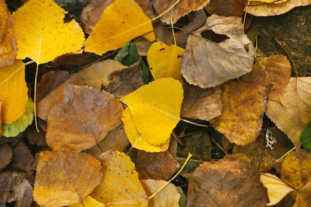 Herbstfarben. gefallene blätter Premium Fotos
