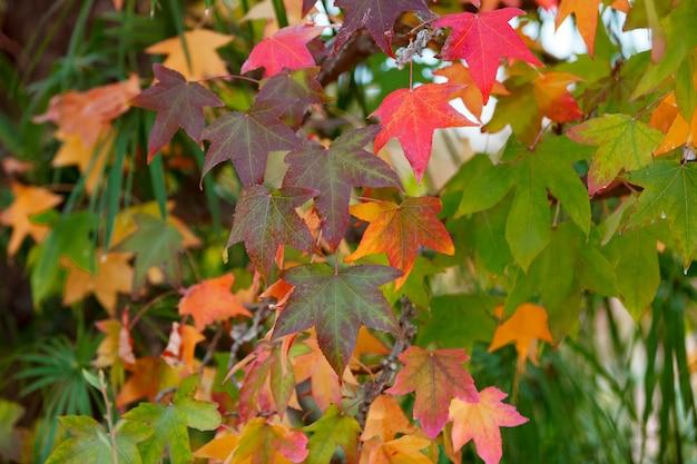 Herbstfarben Premium Fotos