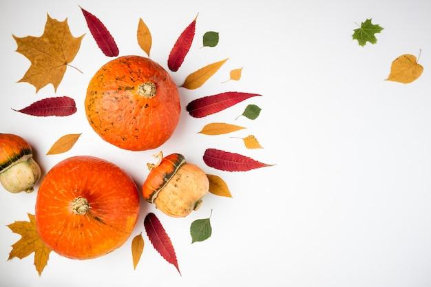 Herbsthintergrund mit kürbisen und blättern auf weiß Premium Fotos