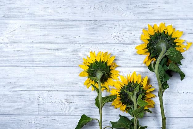 Herbsthintergrund mit sonnenblumen Premium Fotos