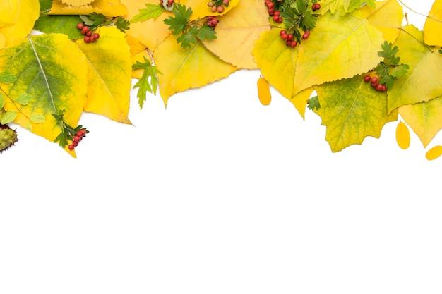 Herbsthintergrund von gelbblättern auf weiß Premium Fotos