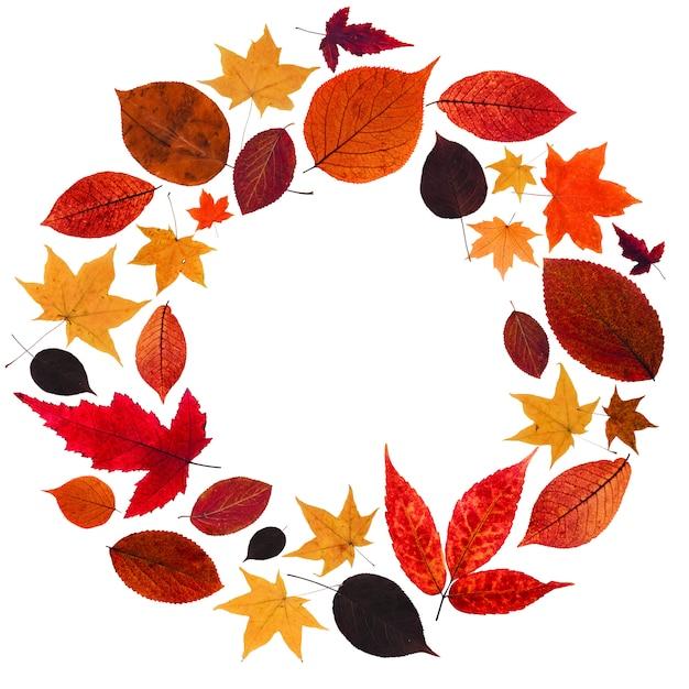 Herbstkranz aus roten und gelben blättern. Premium Fotos