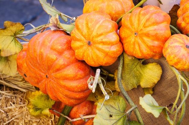 Herbstkürbise aus den grund Premium Fotos