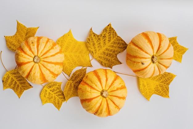 Herbstkürbise und fallblätter auf weiß Premium Fotos