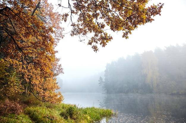 Herbstlandschaft mit einem waldsee und eichenzweigen mit vergilbten blättern Premium Fotos